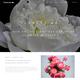 WordPress: FlowersWA