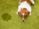 Pet Urine/Odour Cleaning